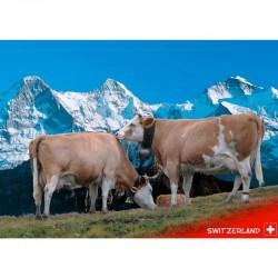 Postkarte Eiger-Mönch-Jungfrau mit Kühe