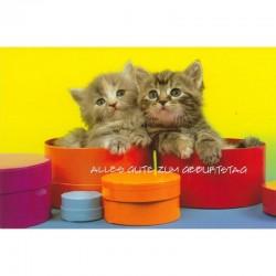Geburtstagskarte Katzenbabys