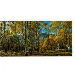 Blankokarte Natur Birkenwald