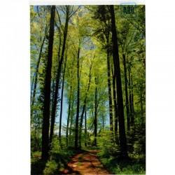 Blankokarte Waldweg