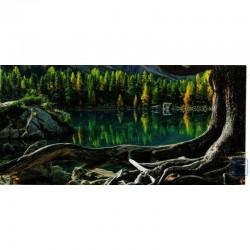 Blankokarte Natur Baumwurzeln
